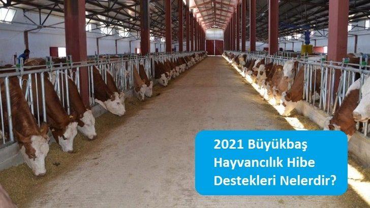 2021 Büyükbaş Hayvancılık Hibe Destekleri Nelerdir?