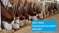2021 TKDK Hayvancılık Destekleri Nelerdir?