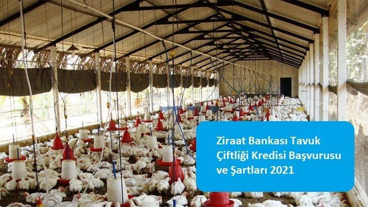 Ziraat Bankası Tavuk Çiftliği Kredisi Başvurusu ve Şartları 2021